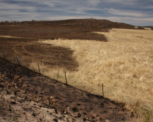 Burnt paddocks 4