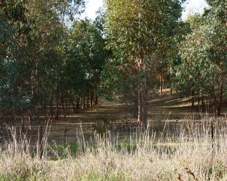 Eculapyt Plantation 2