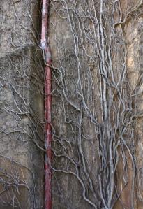 Iandra Wall