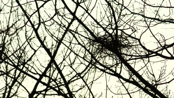 Magpie nest 4