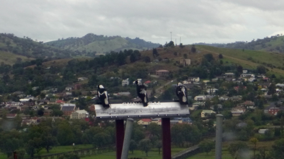 Landscape with three magpies