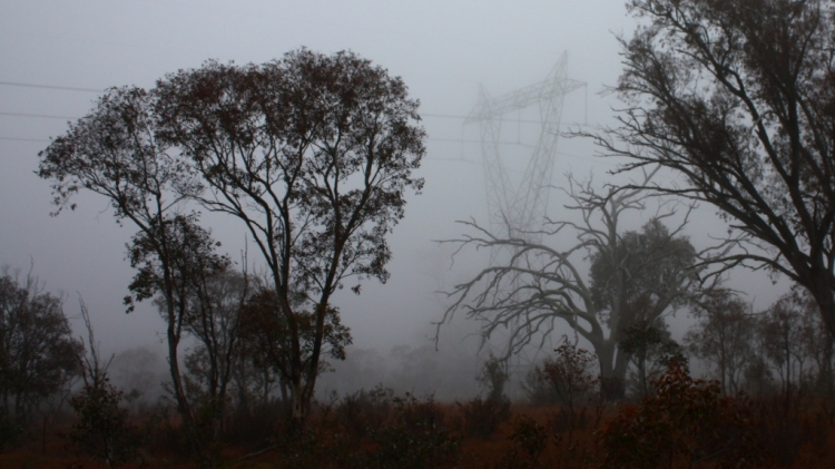 Point Hut Fog