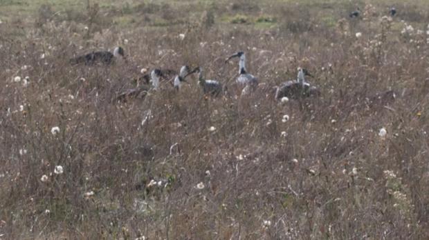 Field of Birds