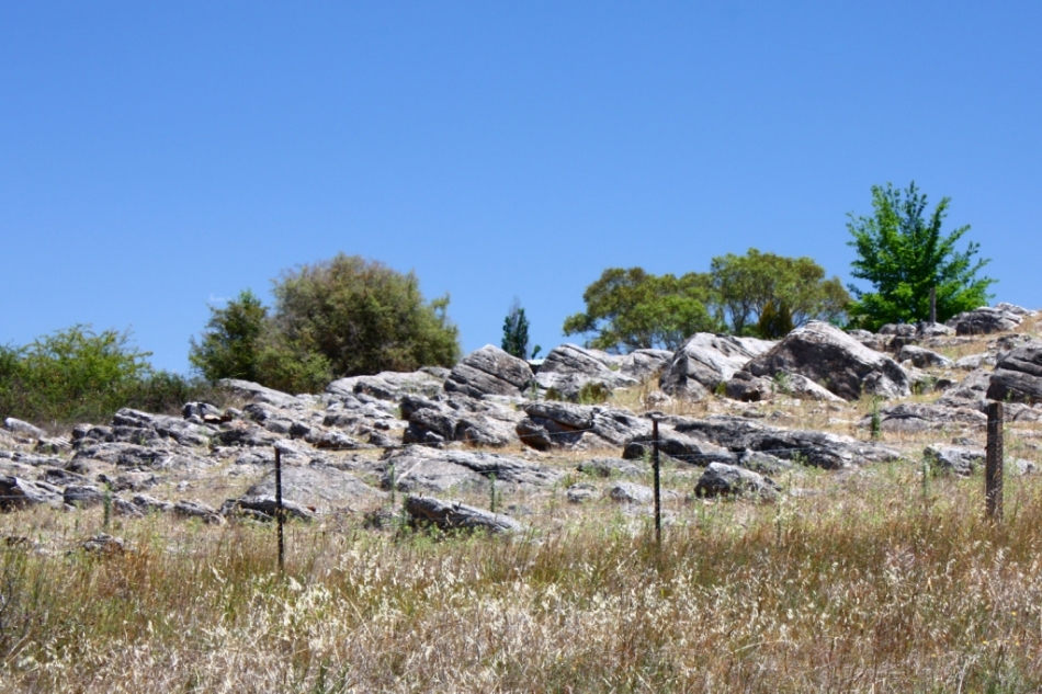 Rock outcrop, Obley Rd, Molong - possibly volcanic?