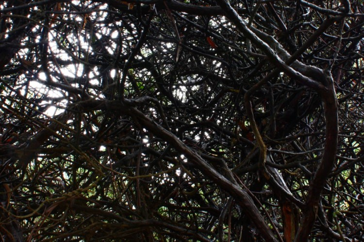 Botanic Garden 3