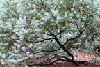 Walk number 19 – Australian National Botanic Gardens