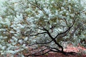 Botanic Garden 5