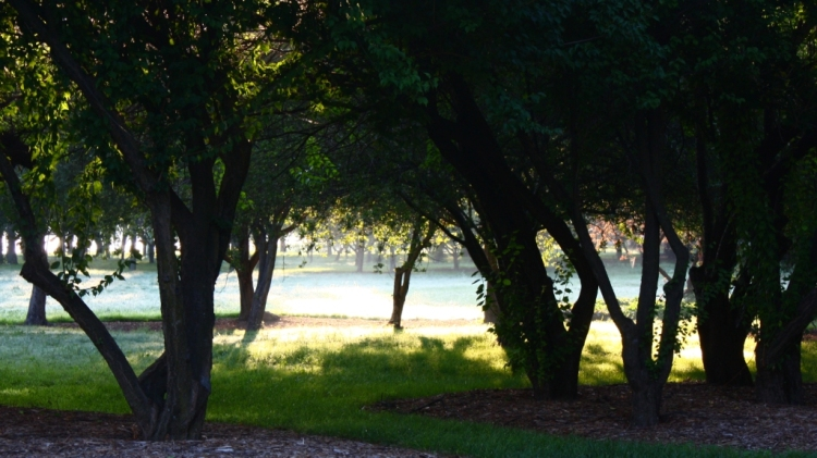 Bowen Park 2