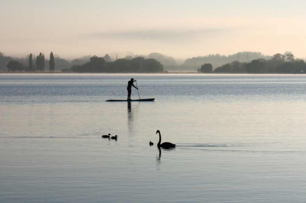 Paddler and Swan - Lake Burley Griffin