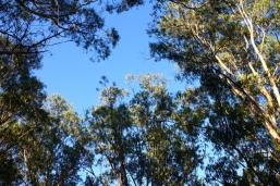 Telopea Park - Tree Line