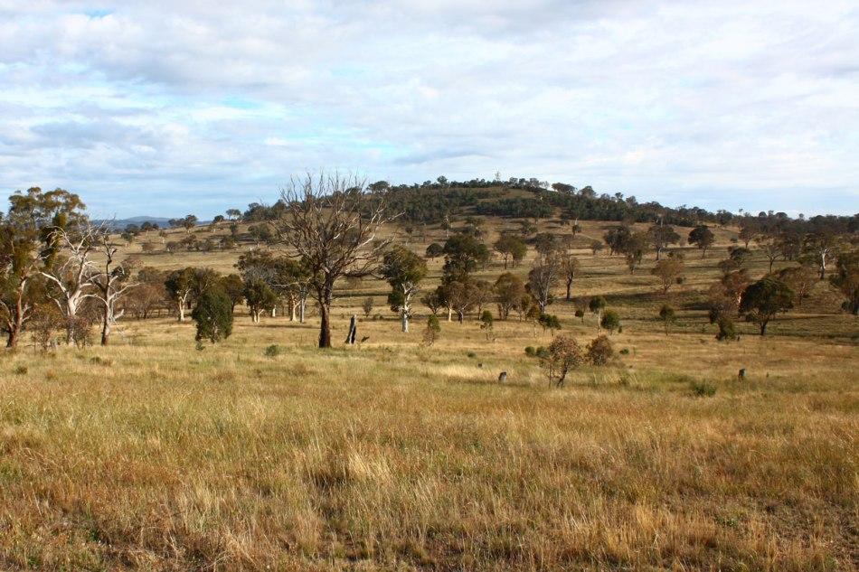 Goorooyarroo Grassland