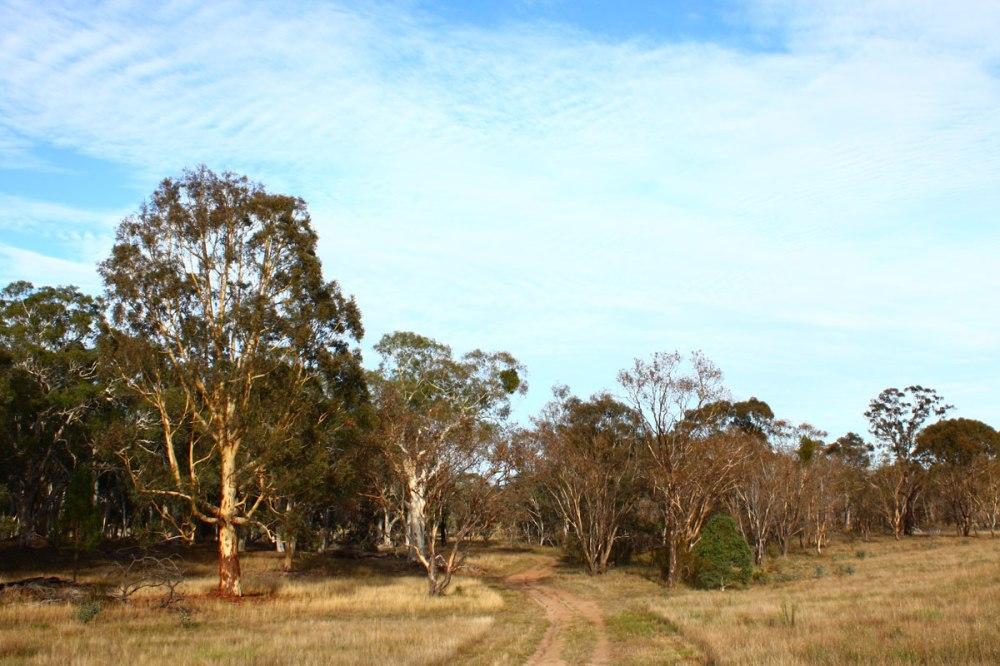 Goorooyarroo Woodland