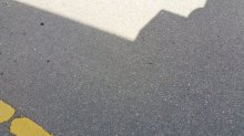 Shadows 20150131