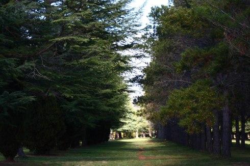Haig Park 1