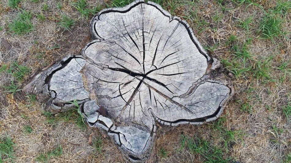 bushmans-dam-stump