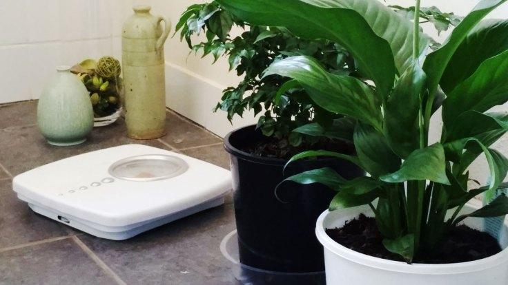 Indoor Plants 1