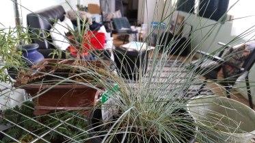 Indoor Plants 2