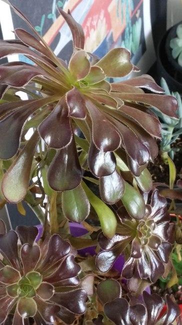 Indoor Plants 3
